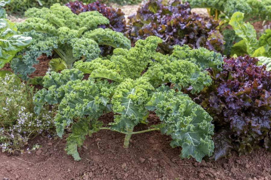 Best Vegetables to Grow in Jan/Feb